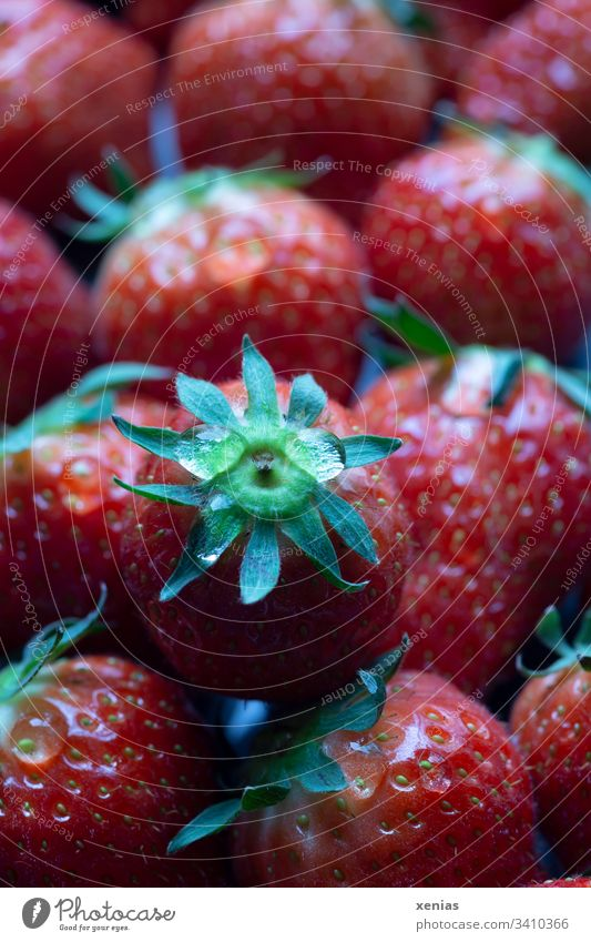 frische Erdbeeren Beeren Frucht Bioprodukte Vegetarische Ernährung Gesunde Ernährung Vitamin gepflückt Geschmackssinn Frühstück Foodfotografie xenias lecker süß