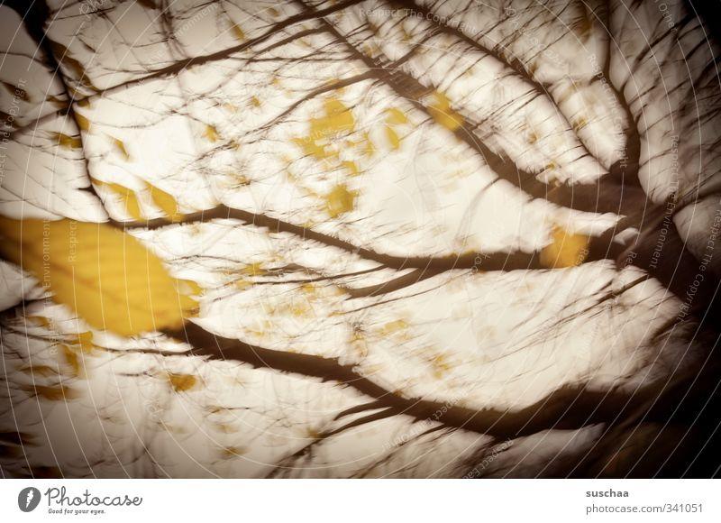555 Natur Pflanze Urelemente Luft Himmel Herbst Klima Klimawandel Wetter Sturm Baum Blatt Holz außergewöhnlich dunkel braun gelb Stimmung Verfall