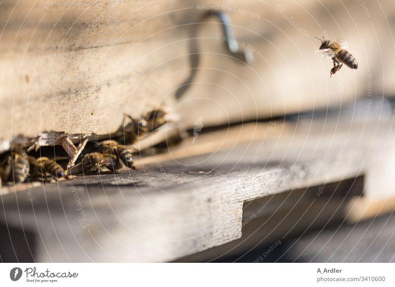 Bienen fliegen in den Bienstock Bienenstock Bienenvolk Honigbiene Honigbienen Flug pollen Natur Imker Arbeit & Erwerbstätigkeit Insekt Bauernhof Kolonie Imkerei