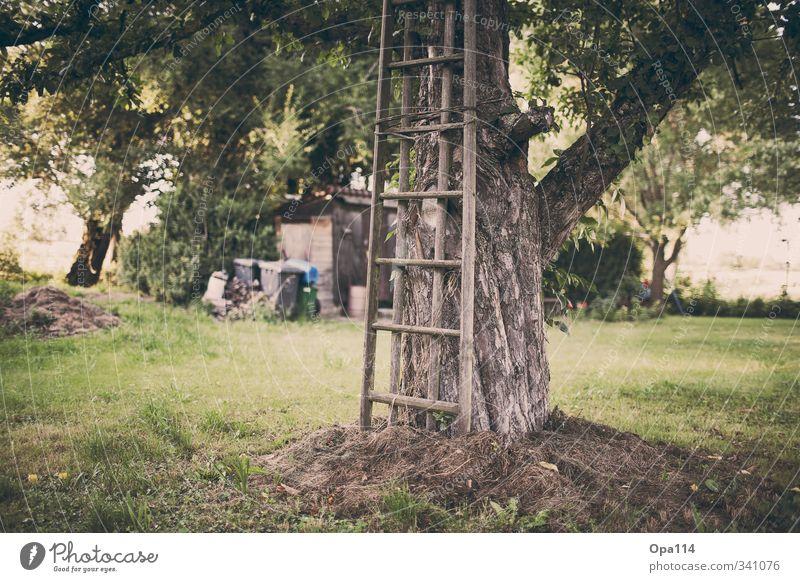 """Gartenanlage Umwelt Natur Pflanze Tier Sommer Baum Gras Sträucher Grünpflanze Nutzpflanze Wiese grün Abenteuer """"Holz Leiter Schrebergarten Kleingarten Hütte"""