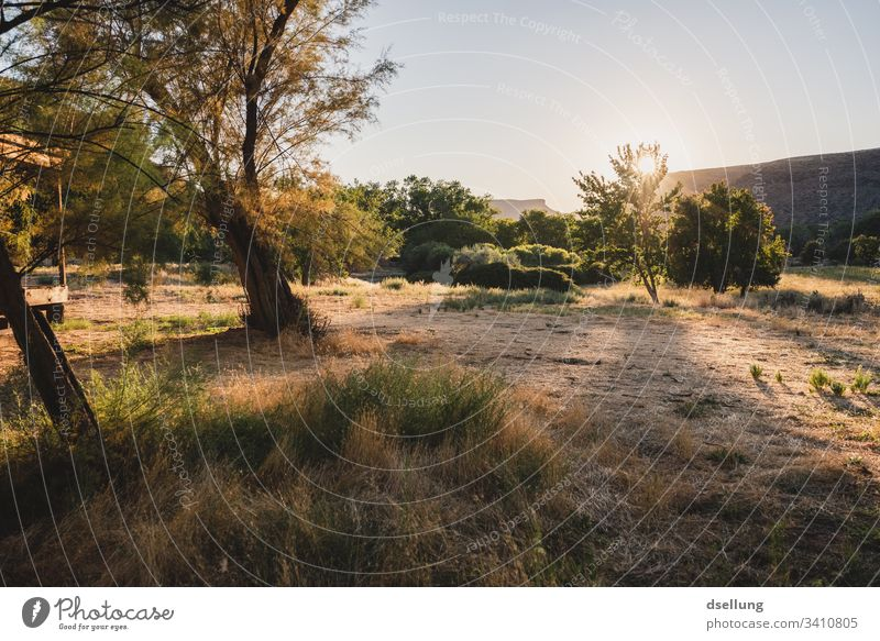 Ein Garten im Sonnenuntergang Sonnenlicht Schatten Licht Textfreiraum unten Außenaufnahme Farbfoto Herbst Park Gras Baum Pflanze Schönes Wetter Natur Umwelt
