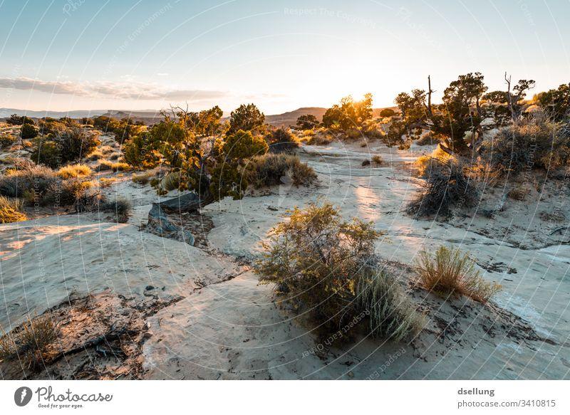 Büsche auf felsigem Boden in tief stehender Abendsonne Landschaft Busch Sonnenuntergang Himmel Wolken Schönes Wetter Wärme Zufriedenheit Sonnenaufgang Natur
