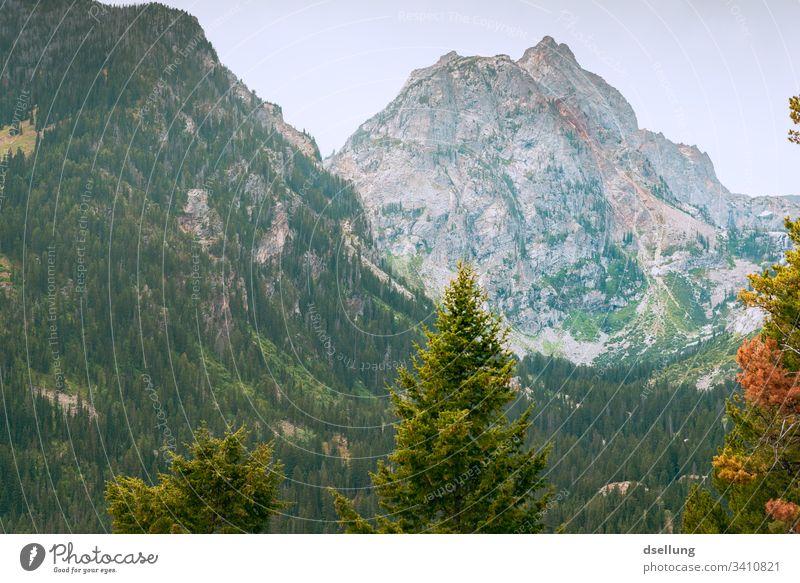 Berghang im Herbst Berge u. Gebirge Wiese Baum Schönes Wetter blau grün ruhig Himmel Sommer Natur Landschaft Idylle Farbfoto Außenaufnahme Menschenleer