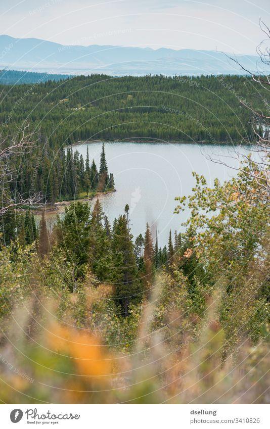 Ein See mitten im Wald zwischen Tannen und einer Bergkette Seeufer grün Dämmerung Landschaft Menschenleer Baum Außenaufnahme Wasser Teich Natur Farbfoto Umwelt