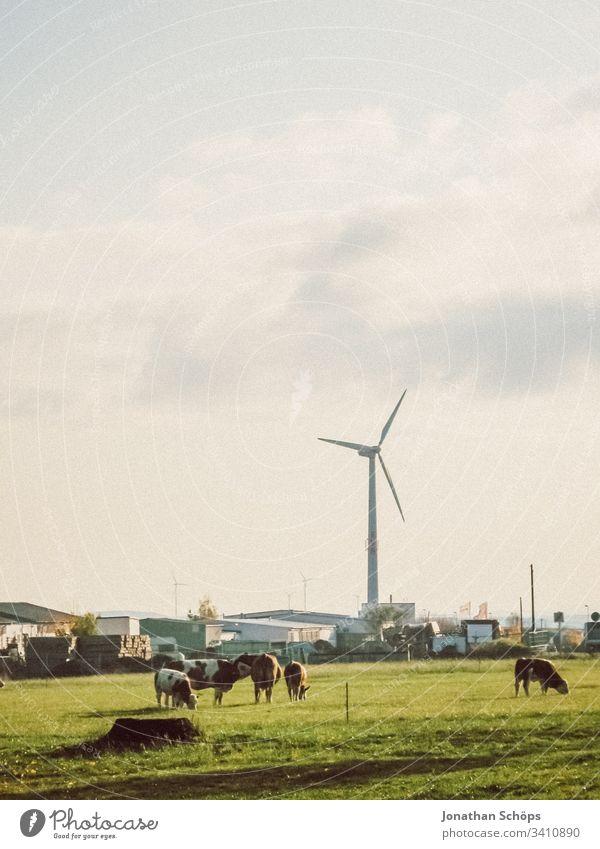 ökologisches Windkraftwerk mit erneuerbarer grüner Energie auf einem Feld in der Abendsonne Herbst alternativ Hintergrund blau Wandel & Veränderung Sauberkeit