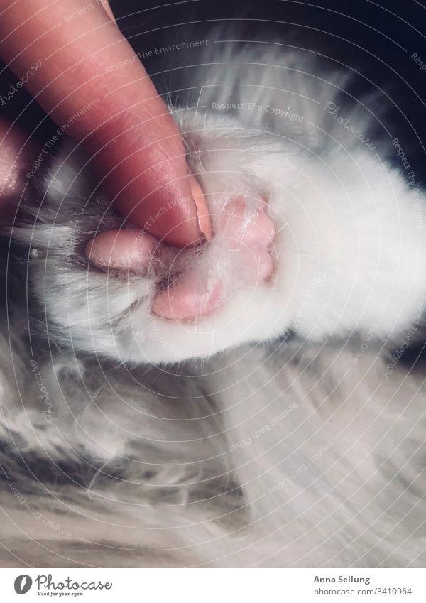 Rosa Katzenpfote zum Anfassen blaue augen Unschärfe genießen Detailaufnahme süß Schatten Kontrast weich Sympathie Geborgenheit Vertrauen ruhig Pfote Erholung