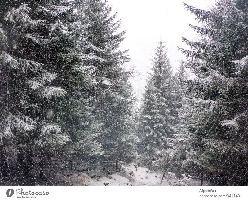 Winter is coming Baum Schnee kalt Wald Waldlichtung Menschenleer Natur Frost Außenaufnahme Tag Farbfoto frostig Schneefall Schneelandschaft Winterwald ruhig