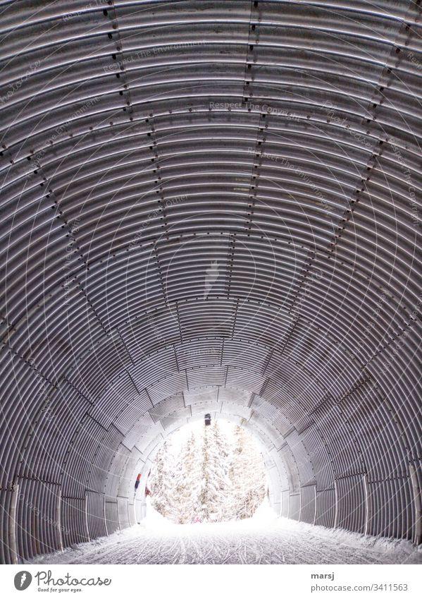 Am Ende des Wellblechtunnels leuchten schneebedeckte Bäume Tunnel Schnee Licht am Ende des Tunnels Muster Strukturen & Formen Sogwirkung rund gebogen Bogen