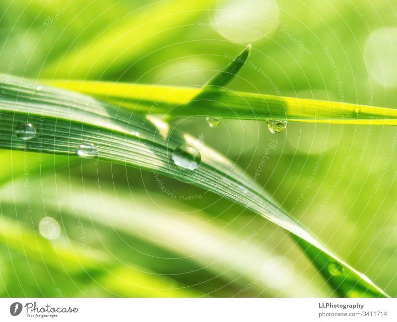 Regentropfen-Party auf einen Grashalm Wasser Tropfen grün Frühling Sonnenschein Garten Makroaufnahme