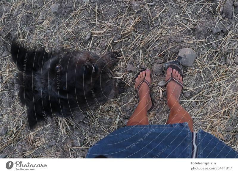 Blick von oben auf Füße und in die Augen eines schwarzen Hundes Hundeblick Hundekopf Haustier Tierporträt Tiergesicht Hundeschnauze Hundeauge Haushund