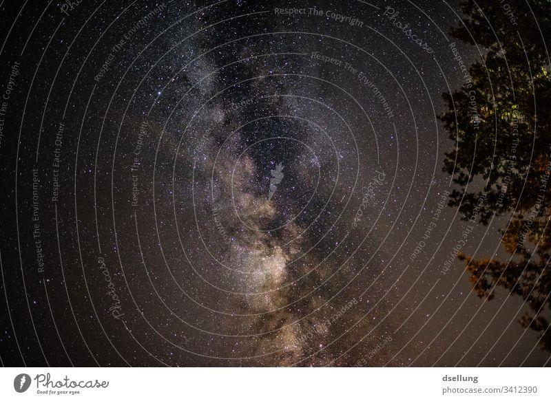 Milchstraße mit Bäumen im Vordergrund Stratosphäre Abend Abenddämmerung Dämmerung Sternenlicht Farbe Mysterium viele funkeln Glanz Sternschnuppe Phantasie