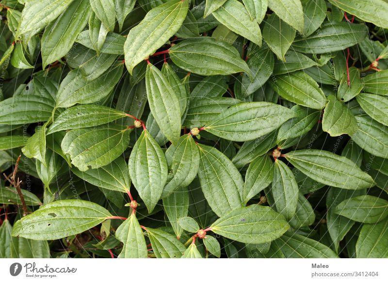 Tautropfen auf den Blättern der Pflanze Hintergrund schön Schönheit Botanik hell Farbe Kondenswasser Kopie Detailaufnahme Tropfen Tröpfchen Umwelt Flora Blume