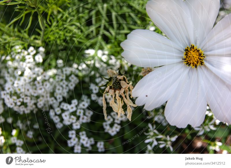 Weiße Blüten Blume Blumenwiese blumen Pflanze Pflanzen Vegetation Flora und Fauna Waldboden Blatt Blätter Mischwald wachsen Natur Landschaft Frühling Sommer