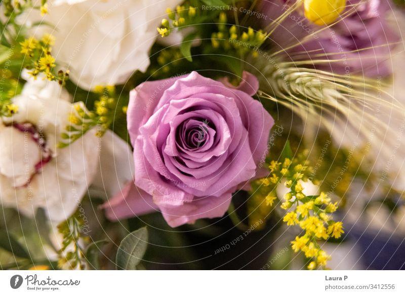 Nahaufnahme einer violetten Rose in einem Blumenstrauss schick Blumenhändler kreativ Stimmung niedlich teuer Rosen Ansicht hell Feier Rosenbouquet vereinzelt