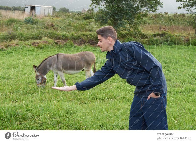 Junger Mann macht eine optische Täuschung mit einem Esel auf einem Grasplatz Bauernhof im Freien Lebensmittel Nachkommen Säugetier füttern Aussehen Nutztier