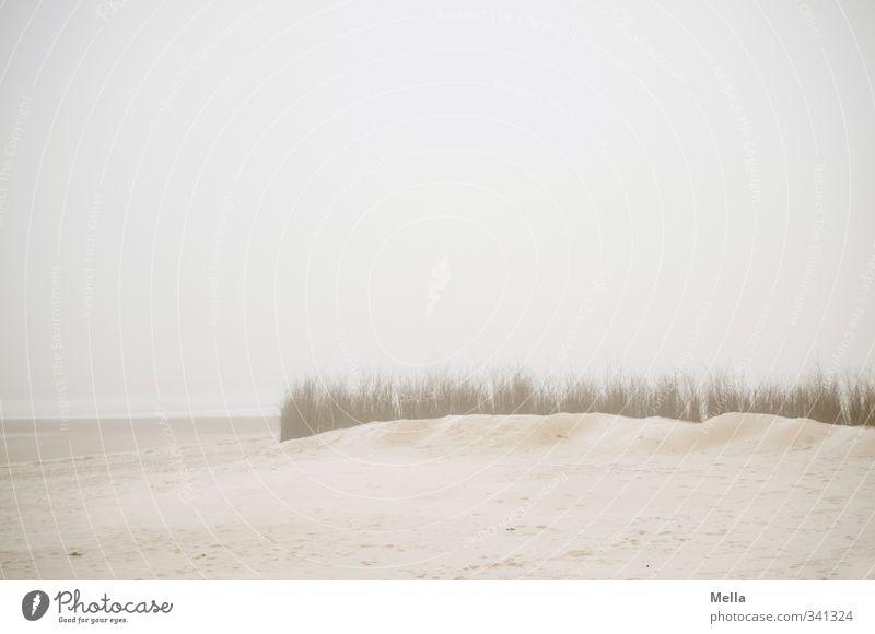 Meer Umwelt Natur Landschaft Sand Himmel Nebel Pflanze Gras Küste Strand Nordsee kalt natürlich trist grau Stimmung ruhig Ferne Dunst leer Farbfoto