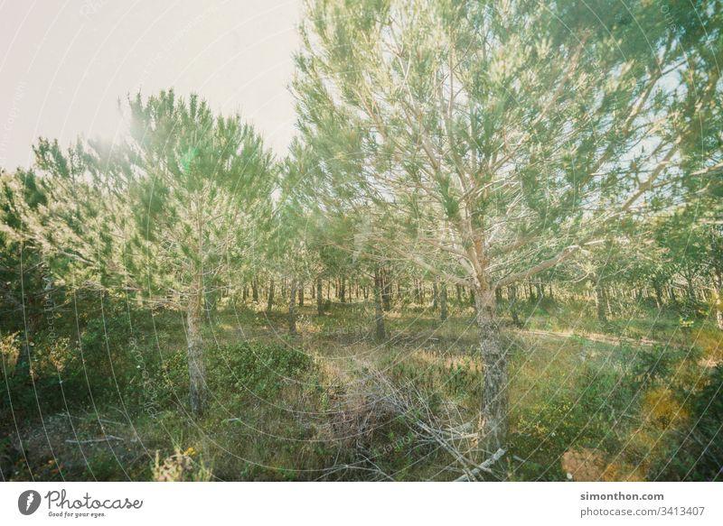 algarve wald bäume natur Natur Landschaft Pflanze Farbfoto Außenaufnahme rein Umwelt Pause Klima Ferien & Urlaub & Reisen ruhig Amazonas Urwald nachhaltig