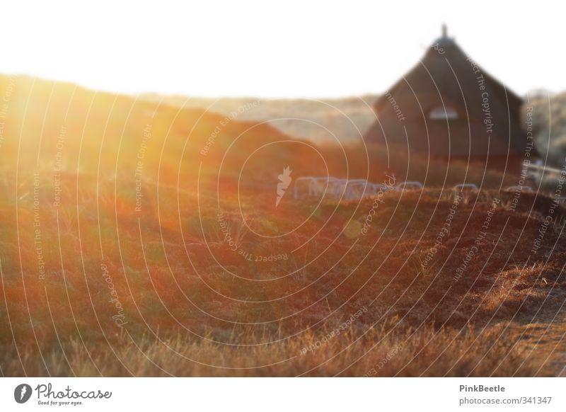 Sylter Sonne Natur Landschaft Wolkenloser Himmel Sonnenaufgang Sonnenuntergang Sonnenlicht Frühling Schönes Wetter Hügel Nordsee Insel Menschenleer Haus