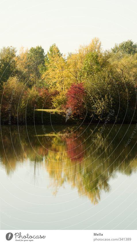 Spiegelig Umwelt Natur Landschaft Pflanze Wasser Sommer Herbst Baum Sträucher Seeufer Teich verblüht dehydrieren Wachstum natürlich Idylle Verfall
