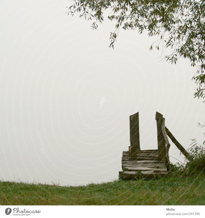 Textfreiraum Umwelt Natur Landschaft Wasser Frühling Sommer Pflanze Baum Gras Grünpflanze Weide Ast Seeufer Teich Einsamkeit Erholung Pause ruhig Steg leer