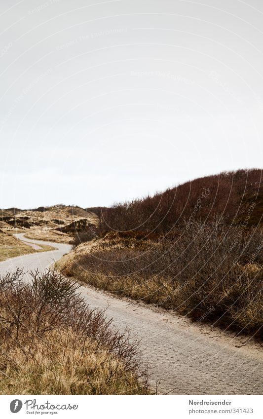 Zwischen den Dünen Natur Ferien & Urlaub & Reisen Pflanze Sommer Erholung Einsamkeit Landschaft ruhig Gras Wege & Pfade Küste braun Tourismus Sträucher Schnur