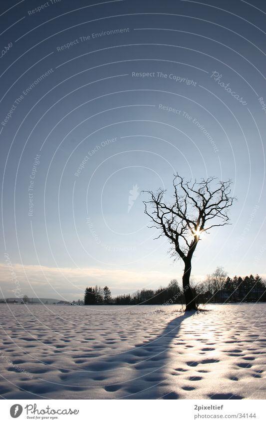 Baum Gegenlicht Feld Haus Wolken weiß schwarz Sonne Himmel Schnee Landschaft blau