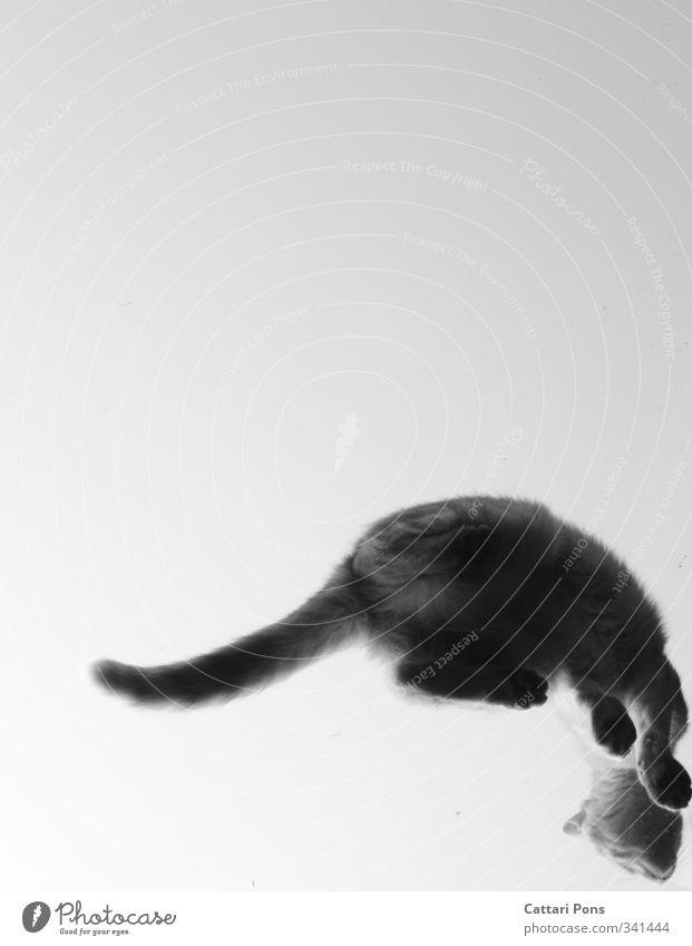 Ausweg... Tier Haustier Katze 1 Glas berühren machen sitzen einzigartig verrückt wild Pfote Schwanz Dachfenster oben Froschperspektive Schwarzweißfoto