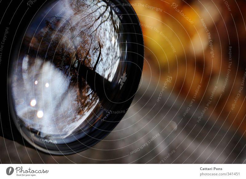 Das dritte Auge Natur Herbst Pflanze Baum glänzend Fotokamera Objektiv Linse nah hell Reflexion & Spiegelung Glas Fotografie Gerät Starke Tiefenschärfe