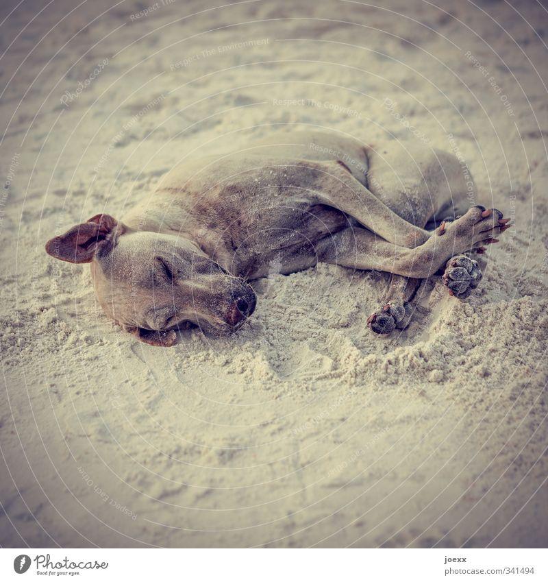 Wellness Haustier Hund 1 Tier genießen liegen schlafen kuschlig braun grau schwarz Farbfoto Gedeckte Farben Außenaufnahme Menschenleer Tag