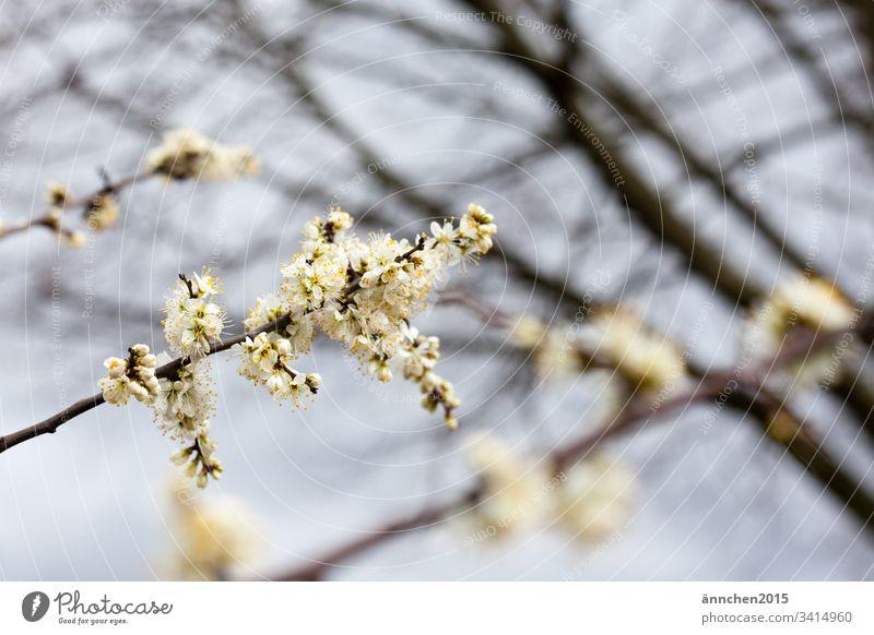 Der Frühling ist da! Blüten Farbfoto Natur Außenaufnahme Pflanze Tag Menschenleer natürlich Blume Blühend schön grün Garten Duft weiß Wachstum Sommer Umwelt