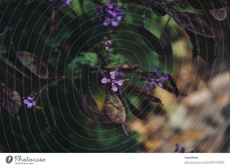 Schöne Aufnahme von Wildblumen Blumen geblümt Frühling Muster Hintergrund Natur natürlich Schönheit wild frisch Frische grün Blütezeit blühend Blühend lieblich