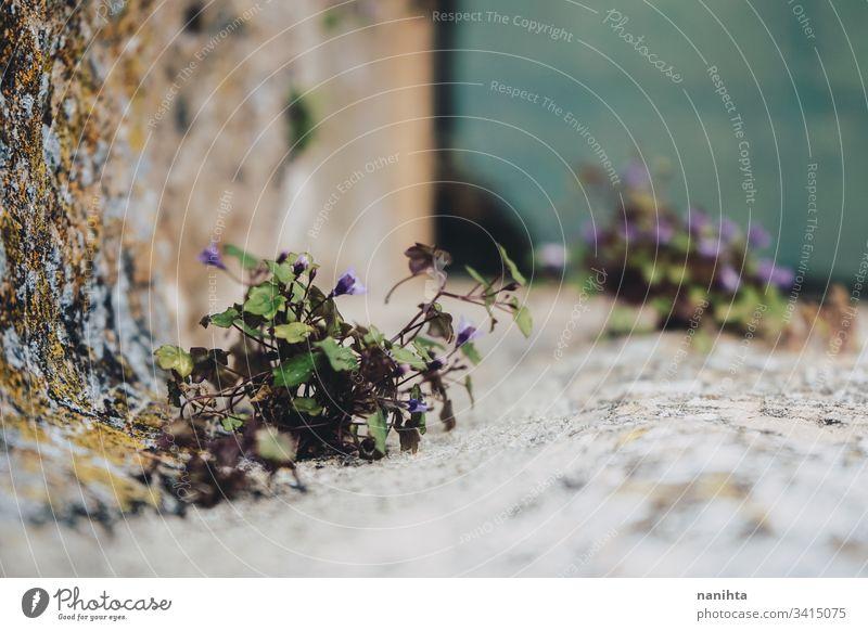 Wenig Pflanzenwachstum in einer Brunnenwand Blume Natur Leben Wachstum Frühling Stein Blatt Blätter Scheitel Teil der Anlage Bokeh Unschärfe natürlich wachsend