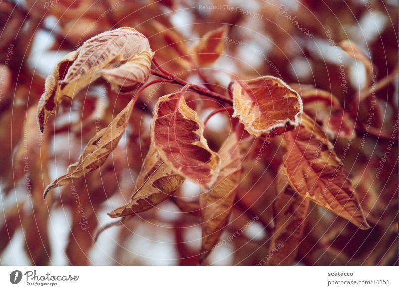 Gelbbunter Eschenahorn Ahorn gelb rot braun November Herbst Winter Nebel