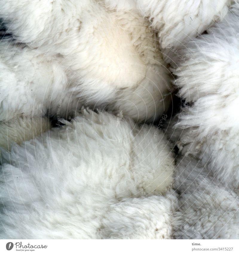 Winterkollektion behaarung fell tier wild ungekämmt oberfläche geheimnisvoll rätsel inspiration intensiv hell muster Struktur teilansicht schaffell zusammen