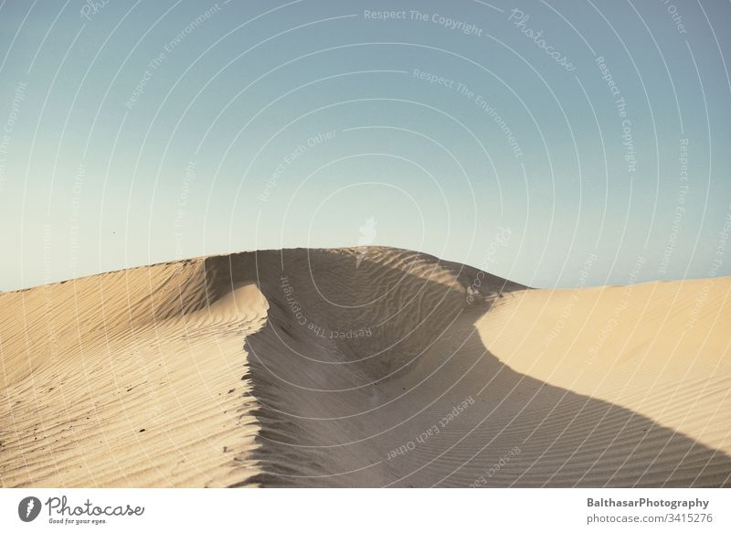 Sanddüne in Essaouira Düne sanddüne Sonnenlicht Landschaft Natur Außenaufnahme Ferien & Urlaub & Reisen trocken Menschenleer Tag Afrika Marokko Schatten Sahara