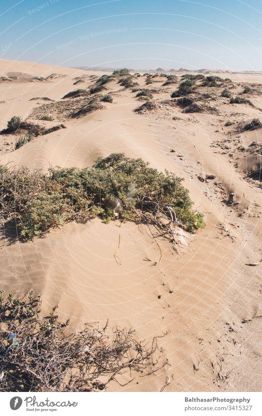 Küstendünen (Sahara) Marokko Afrika Plastikmüll Sand sanddüne Düne Gräser Sträucher Wind Horizont Sonnenlicht Landschaft Ferien & Urlaub & Reisen Menschenleer