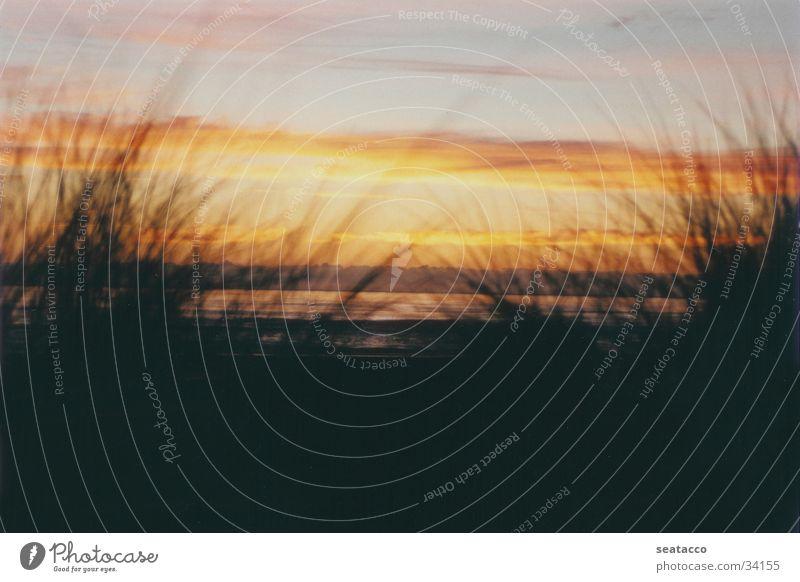 Romantic Sunset Strand Meer Wolken Sonnenuntergang Gras gelb schwarz Dämmerung Wasser