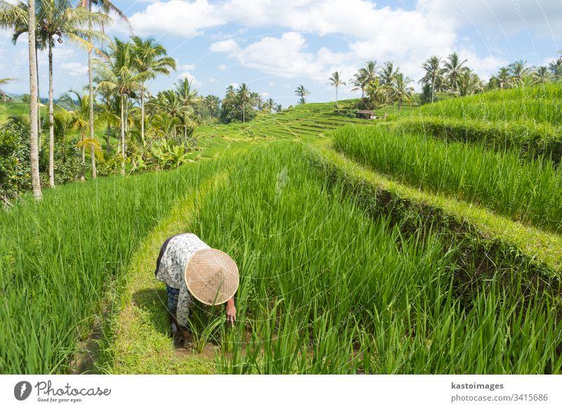 Bäuerin mit traditionellem asiatischen Reisfeldhut bei der Arbeit in den wunderschönen Jatiluwih-Reisterrassenplantagen auf Bali, Indonesien und Südostasien