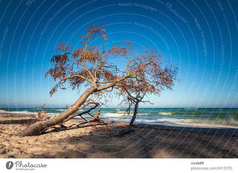 Der Weststrand auf dem Fischland-Darß Küste Ostsee Ostseeküste Meer Strand Baumstamm Himmel Wolken blau Langzeitbelichtung Mecklenburg-Vorpommern Landschaft