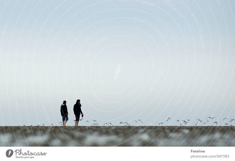 Rømø | 2 Männer und das Watt Mensch Natur Mann Tier Strand Erwachsene Umwelt Küste natürlich Vogel maskulin Erde wandern Urelemente Nordsee Schwarm
