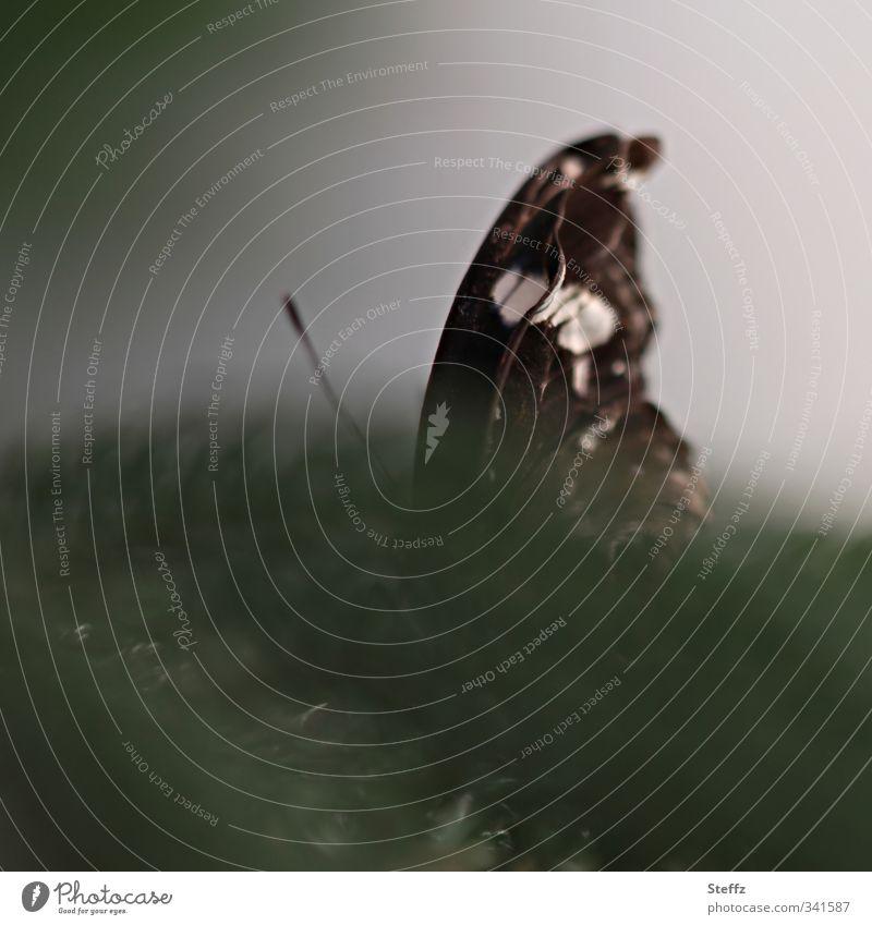 ein bisschen versteckt Schmetterling geheimnisvoll anders Versteck ruhe suchen Schutz Sicherheit verstecken sich verstecken verborgen dunkelgrün Misstrauen