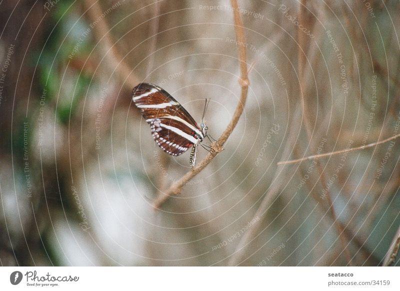 Schmetterling02 Tier Flügel Insekt Schmetterling Zweig