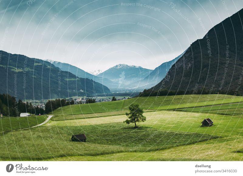 Einzelner Baum auf einer Alm mit Bergen im Hintergrund Gipfel Alpen Felsen Schönes Wetter Klima Landschaft Natur Umwelt wandern Berge u. Gebirge Sommerurlaub