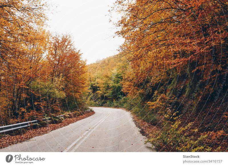 Straße im Herbstwald, Naturlandschaft Wald fallen Baum Bäume gelb Landschaft Blätter Hintergrund schön Park Laubwerk Saison grün orange Licht Sonne rot Farbe