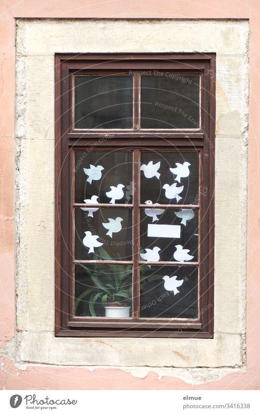 weiße Papiertauben hinter einem Fenster Taube weiße Tauben Glasfenster Vogel Symbol Friedenstaube Haus Wunsch wünschen Farbfoto Menschenleer Tier Darstellung