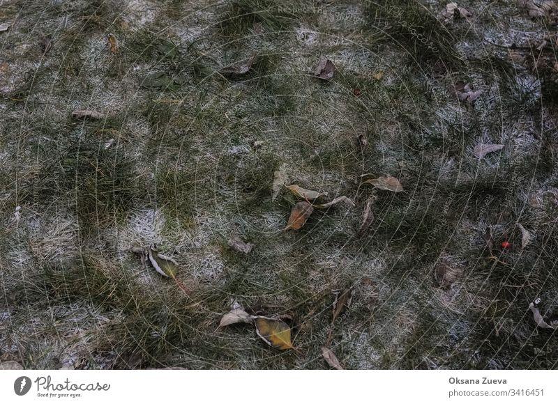 Herbstblätter und erster Schnee. Herbst verschwommener Hintergrund Ast hell kalt Farbe farbenfroh Umwelt fallen Laubwerk Wald frisch Frost grün Landschaft Blatt