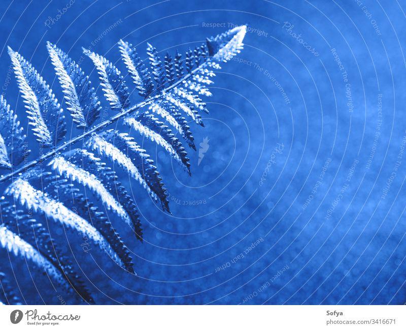 Glitzerndes klassisches Blau glänzender Hintergrund mit Zweig Glitter blau Weihnachten Ast golden Silber tropisch Pflanze Marine Winter kalt Schnee abstrakt