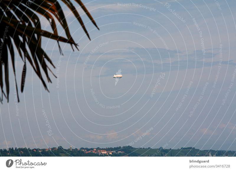 Fernweh! Urlaub Urlaubsstimmung Fernreise Palme Himmel Wolken Zeppelin Ferien & Urlaub & Reisen Außenaufnahme Natur Pflanze Menschenleer Sommer Tourismus Ferne