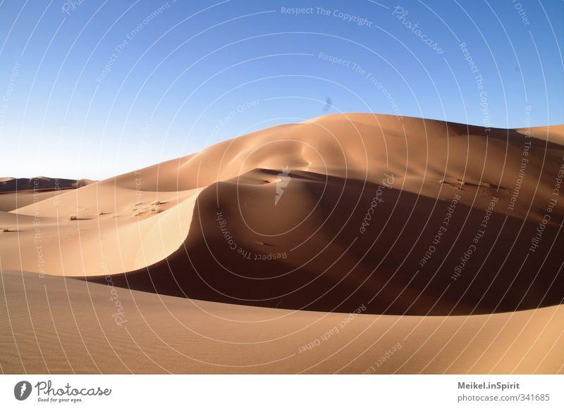 Sand wie Gold Umwelt Landschaft Wolkenloser Himmel Klima Klimawandel Schönes Wetter Wärme Dürre Hügel Wüste Sahara Erg Chebbi Düne heiß blau braun gelb gold