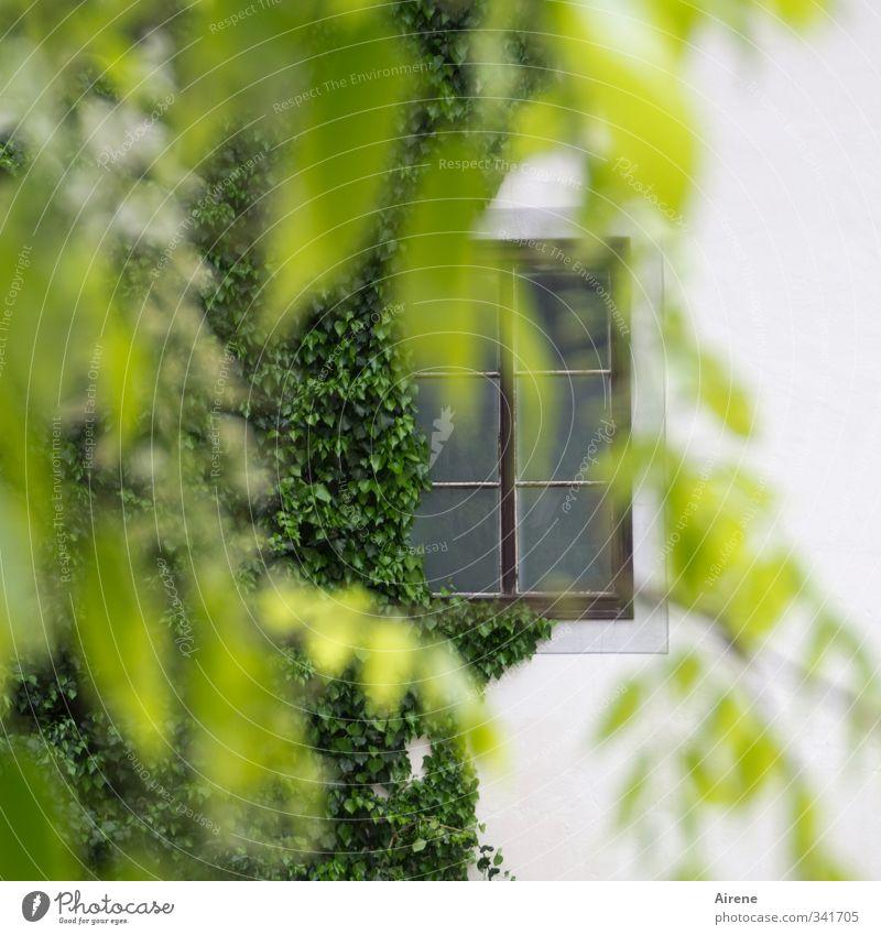 in aller Heimlichkeit Natur grün weiß Pflanze ruhig Haus Fenster Architektur Gebäude hell Fassade beobachten Romantik Freundlichkeit Neugier geheimnisvoll